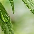 Cannabis - konopná kozmetika