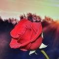 Rosarium - kozmetika s extraktmi ruže