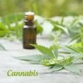 Konopná kozmetika - Cannabis