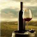 Maceračné vína